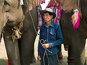 A Tai Lue mahout (handler) and his elephant during the Baci ceremony at the Sayaboury elephant festival, Sayaboury province, Lao PDR. Originally created by ElefantAsia in 2007, the 3-day elephant festival takes place in February in the province of Sayaboury with over 80,000 local and international people coming together to experience the grand procession of decorated elephants. It is now organised by the provincial government of Sayaboury.The Elephant Festival is designed to draw the public's attention to the condition of the endangered elephant, whilst acknowledging and celebrating the ancestral tradition of elephant domestication and the way of life chosen by the mahout.