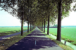 Road Lined By Trees