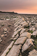 Portrait format of one of the rock shelves west of the entrance to Kilve Beach in th evening light.