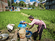 03 AUGUST 2015 - SANKHU, NEPAL:  A woman does her dishes near their temporary housing in a rice field in Sankhu, a community about 90 minutes from central Kathmandu. Her home was destroyed in the earthquake. The Nepal Earthquake on April 25, 2015, (also known as the Gorkha earthquake) killed more than 9,000 people and injured more than 23,000. It had a magnitude of 7.8. The epicenter was east of the district of Lamjung, and its hypocenter was at a depth of approximately 15 km (9.3 mi). It was the worst natural disaster to strike Nepal since the 1934 Nepal–Bihar earthquake. The earthquake triggered an avalanche on Mount Everest, killing at least 19. The earthquake also set off an avalanche in the Langtang valley, where 250 people were reported missing. Hundreds of thousands of people were made homeless with entire villages flattened across many districts of the country. Centuries-old buildings were destroyed at UNESCO World Heritage sites in the Kathmandu Valley, including some at the Kathmandu Durbar Square, the Patan Durbar Squar, the Bhaktapur Durbar Square, the Changu Narayan Temple and the Swayambhunath Stupa. Geophysicists and other experts had warned for decades that Nepal was vulnerable to a deadly earthquake, particularly because of its geology, urbanization, and architecture.    PHOTO BY JACK KURTZ