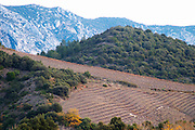 Maury. Roussillon. Impressive mountain formations and vineyards in winter. France. Europe. Mountains in the background.