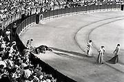 matador making the final kill of a bull