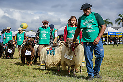 Desfile dos campeões durante a Inauguração oficial 38ª Expointer, que ocorre entre 29 de agosto e 06 de setembro de 2015 no Parque de Exposições Assis Brasil, em Esteio. FOTO: Pedro H. Tesch/ Agência Preview