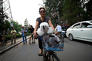 A women pedals with her pet dog along a popular bikeway near the second ring road - Beijing Bike Culture -- 2011 Tour of Beijing Scouting Photos
