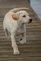 Puppy, Kirkland, Washington, United States