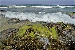 Seaweed In Rock