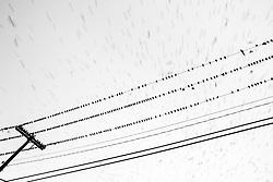 Birds on wires, with full moon, Deep Ellum, Dallas, Texas