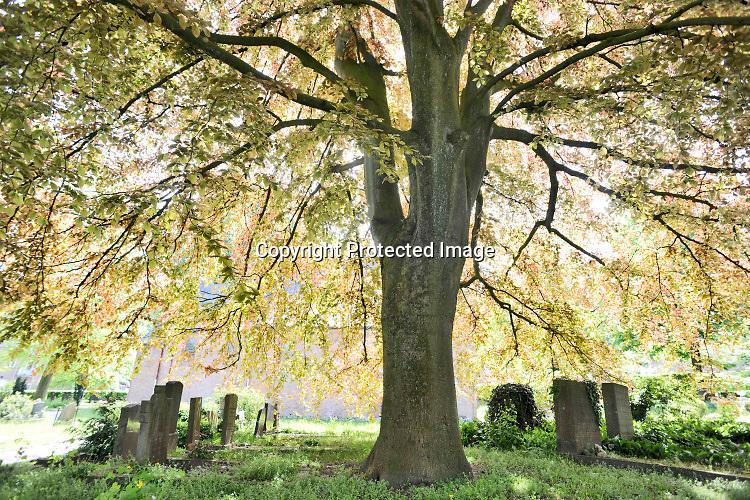 Nederland, Beek-Ubbergen, 7-5-2019Grafzerken onder een grote boom op de oude begraafplaats.Foto: Flip Franssen