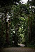 Alto Caparao_MG, Brasil...Parque Nacional do Caparao em Alto Caparao...National Park of Caparao in Alto Caparao...Foto: BRUNO MAGALHAES / NITRO