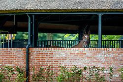 Atmosphere<br /> Brussels Stephex Masters<br /> © Hippo Foto - Sharon Vandeput<br /> 27/08/21