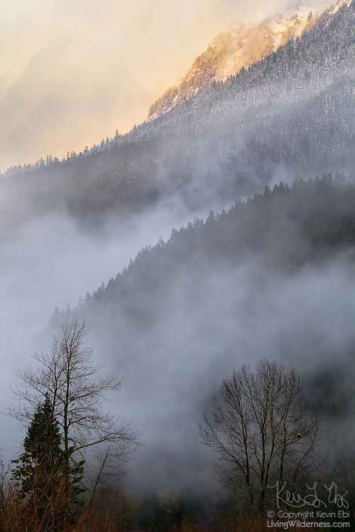 A storm begins to clear at sunset in the valley below the snowy Sauk Mountain in the North Cascades of Washington state. Three bald eagles are waiting, perched in the trees along the Skagit River near the town of Rockport.