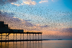 © Licensed to London News Pictures. 10/02/2017. Aberystwyth, Wales, UK. As the sun sets spectacularly at the end of a clear and bitingly cold day,  tens of thousand of starlings crowd together and roost safely for the night on the handrails and the cast iron legs underneath Aberystwyth's seaside pier .Photo credit: Keith Morris/LNP