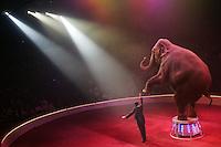 Elephant act at the circus Bouglione, Paris - Photograph by  Owen Franken.
