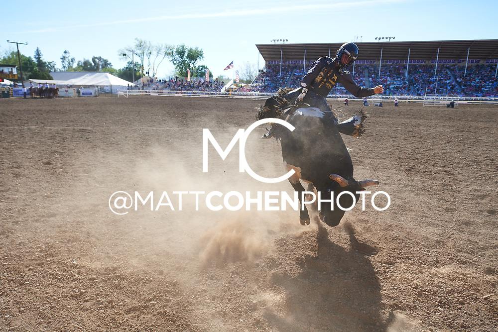 Sage Kimzey / 449 Jive Turkey of Bridwell, Red Bluff 2019<br /> <br /> <br />   <br /> <br /> <br /> File shown may be an unedited low resolution version used as a proof only. All prints are 100% guaranteed for quality. Sizes 8x10+ come with a version for personal social media. I am currently not selling downloads for commercial/brand use.