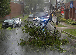 Tree branches block a street in Halifax as hurricane Dorian approaches on Saturday, September 7, 2019, Canada. Photo by Andrew Vaughan/CP/ABACAPRESS.COM
