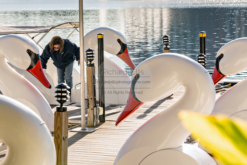 A worker cleans the famous swan boats on Lake Eola Park in Orlando, Florida. Lake Eola Park is located in the heart of Downtown Orlando and home to the Walt Disney Amphitheater.