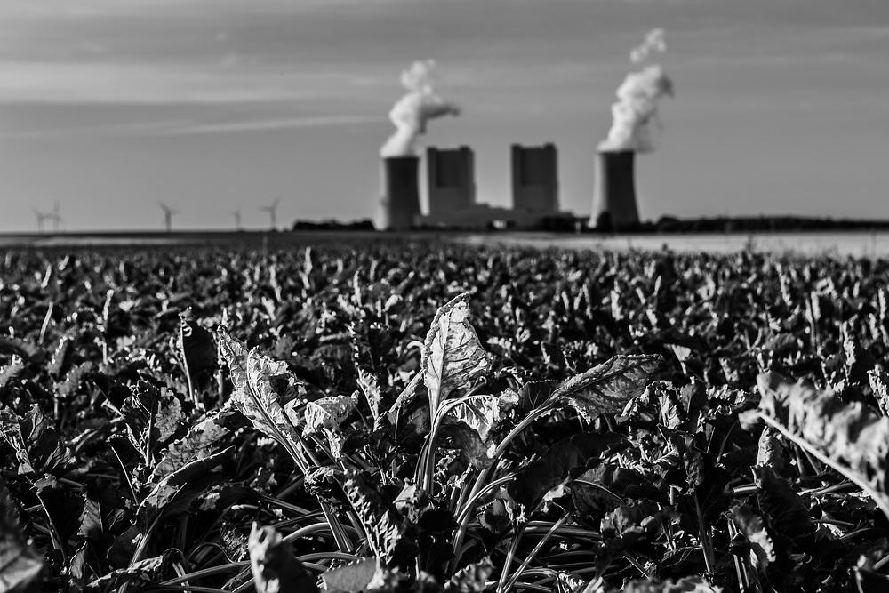 Grevenbroich, DEU, 31.07.2018<br /> <br /> Ein Zuckerruebenfeld , im Hintergrund das Braunkohlekraftwerk Neurath.<br /> <br /> Das Braunkohlekraftwerk Neurath, ein von der RWE Power AG mit Braunkohle betriebenes Grundlastkraftwerk in Grevenbroich (Rhein-Kreis Neuss) im Rheinischen Braunkohlerevier, ist das zweitleistungsstaerkste Kraftwerk Europas.<br /> <br /> The lignite power plant Neurath, a lignite-fired base load power plant operated by RWE Power AG in Grevenbroich, Germany (Rhein-Kreis Neuss) in the Rhenish lignite mining district, is Europe's second-largest power plant.<br /> <br /> <br /> Foto: Bernd Lauter/berndlauter.com