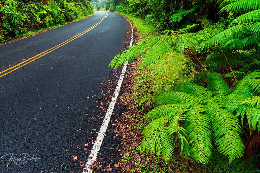 Park road through the fern forest, Hawaii Volcanoes National Park, Hawaii USA