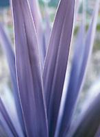 Ornamental palm plant in garden&#xA;<br />