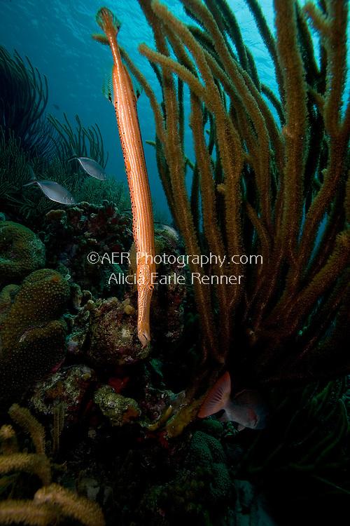 Bonaire reef fish hides