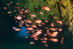 brick soldierfish, Myripristis amaena, in lava tube cave, First Cathedral, Lanai, Hawaii, USA, Pacific Ocean