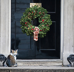 © Licensed to London News Pictures. 05/12/2016. London, UK. Larry, the Prime Minister's cat, sits beneath a wreath of Christmas holly on the doorstep to No 10 Downing Street. Photo credit: Rob Pinney/LNP