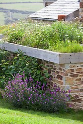 Wildflower meadow on roof. Green roof designed by Carol Misch