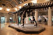 Diplodocus dinosaur skeleton, known as Dippy on tour at the Gas Hall part of Birmingham Museum in Birmingham, United Kingdom.
