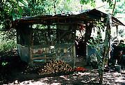 Hut, Kalalau Valley, Kauai, Hawaii