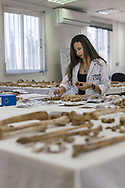 Europe, CYPRUS, Nicosia. Emine Çetinsel, a forensic anthropologist at the Committee for Missing Persons (CMP) in the UN Buffer zone, Nicosia, Cyprus, examines recovered human remains in the lab.