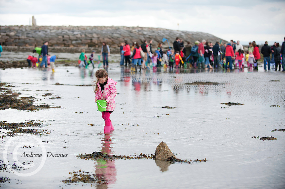 26/05/2013 Alice Glynn  at the Explore the Shore Beach Safari which took place in Salthill, Galway. Organised by the Marine Institute, GMIT, NUIG, Irish Wildlife Trust and Galway Atlantaquaria the Beach Safari took place a week ahead of next week's inaugural Galway Sea Festival due to tides...Taking place from Friday next 31stMay- Monday June 3rd the Galway Sea Festival is a new four day family friendly festival with an impressive list of water based activities and about town events all of which are either affordable to attend or free..From sandcastle competitions to windsurfing, paddle boarding and kayaking, day cruises and tours of the Irish Naval vessel LE Aoife, there will be something to attract even the most committed land lover!.A highlight of the festival weekend will be the Galway Sea Festival Regatta featuring the Galway Bay Sailing Club with spectacular Parades of Sail into Galway Harbour on the Friday and Saturday evenings..On-shore activities will include Family Beach Walks, Tug-0-Wars, Sandcastle Competitions and Sand Sculpting Workshops. An early and family-friendly celebration of World Oceans Day will take place on Sunday 2ndJune at Galway Atlantaquaria in Salthill featuring exhibits, science shows, diving demonstrations, fish feedings, face painting, story-telling, cartoon-drawing and much more. Picture: AndrewDownes