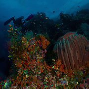 Dive Spot: Four Kings