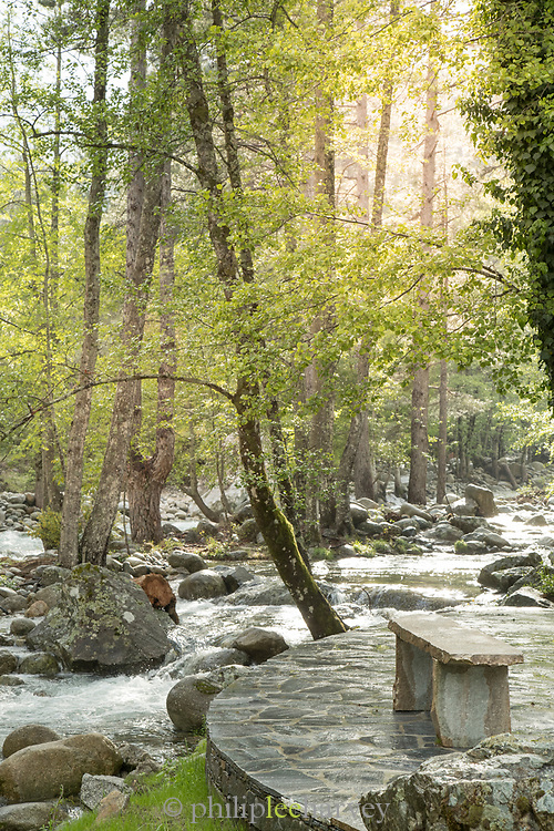 View of river with rocks on forest on sunny day, Restonica River, Corte, Corsica, France