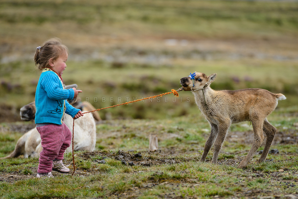 Three-year-old boy playing with a young reindeer at a Dukha (Tsaatan) reindeer herder community, Mongolia. Approximately 200 families comprise the Tsaatan or Dukha community in northwestern Mongolia, whose existence is intimately linked to their herds of reindeer. Photo © Robert van Sluis