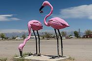 Giant flamingos and mountains. San Luis Valley CO