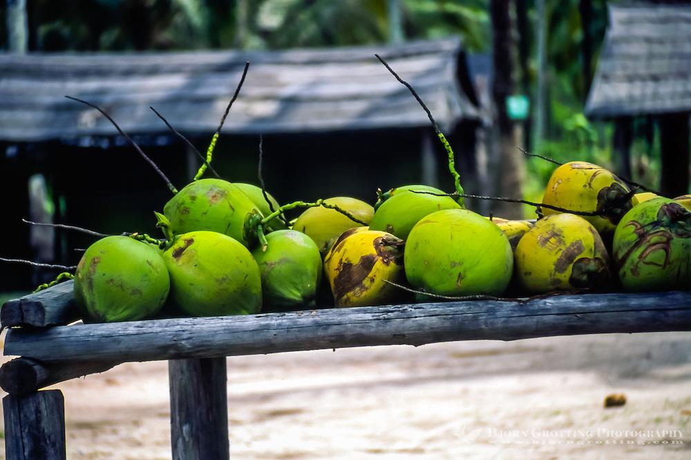 Riau Islands, Bintan. Coconuts in a small village on Trikora beach, Bintan east coast.