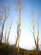 Kale bomen tijdens de herfst, Westduinpark, Den Haag - Bare trees during autumn, Westduinpark. The Hague, Netherlands