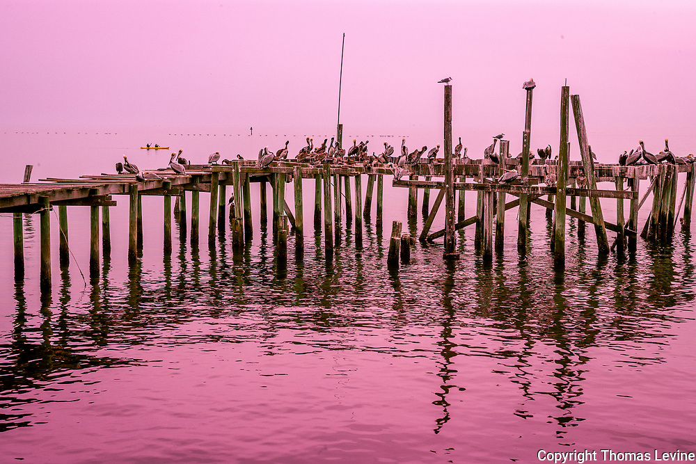 Limited Edition: Cedar Key pelicans sitting on a old pier on a hazy day with no horizon. #artprint #homedecor #interiooordesign #officeart