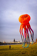 large octopus kite on the banks of the river Rhine in the town district Deutz, view to the cathedral, Cologne, Germany.<br /> <br /> grosser Octopus Drachen ueber den Rheinwiesen in Deutz, Blick zum Dom, Koeln, Deutschland.