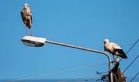 04.06.2015 wies Dubicze Cerkiewne woj podlaskie  n/z  bociany na slupie oswietleniowym fot Michal Kosc / AGENCJA WSCHOD