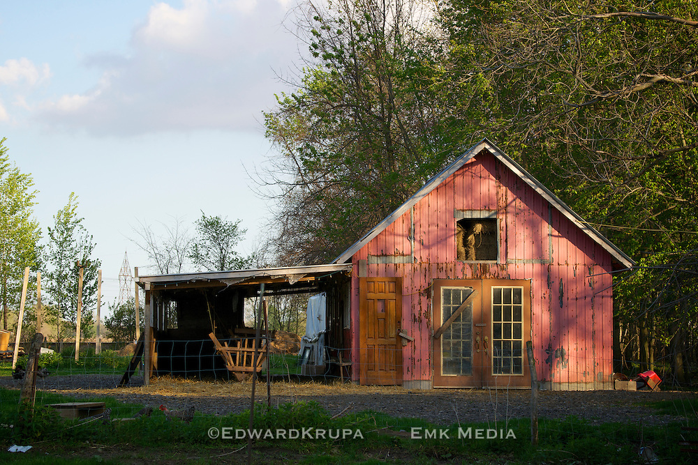 A pink goat stable in late afternoom.