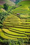 Paddy fields along the road (QL 32) between Mu Cang Chai and Than Uyen, Vietnam, Southeast Asia
