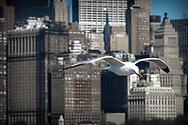 NEW YORK  2020V10<br /> Mås som följer båten till Libery Island<br /> <br /> Foto: Per Danielsson/Projekt.P