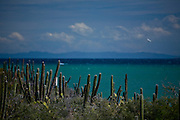 Isla Margarita_VEN, Venezuela...Litoral de Isla Margarita, Venezuela. Na foto Vegetacao de Cactos...Coast of Isla Margarita, Venezuela. In the photo some cacti...Foto: JOAO MARCOS ROSA / NITRO