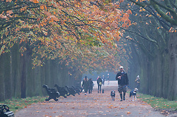 © Licensed to London News Pictures. 06/11/2020.  <br /> Greenwich, UK. A man walking his dogs under autumn leaves. People out and about in Greenwich Park, London making the most of their lockdown exercise on a cold November morning. Photo credit:Grant Falvey/LNP