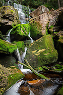 The tannin rich waters of Shay's Run descends into Blackwater Canyon in West Virginia among the verdent mossy boulders.