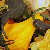USA, California, San Diego. Various gourds at pumpkin patch.