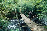Crossing wooden footbridge over Snowbird Creek, spring, Snowbird Area, Nantahala National Forest, North Carolina