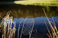 A dream catcher-like spider web reflects the morning sun on Jialuo Hu Lake, near Yilan, Taiwan.