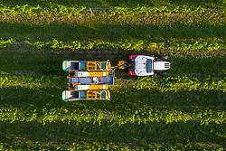 THEMENBILD - Traubenvollernter im Einsatz bei der Weinlese in Donnerskirchen am Mittwoch 16. September 2020 // Grape harvesters in action during the grape harvest in Donnerskirchen on Wednesday September 16, 2020. EXPA Pictures © 2020, PhotoCredit: EXPA/ Johann Groder